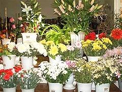 доставка цветов г. Королев